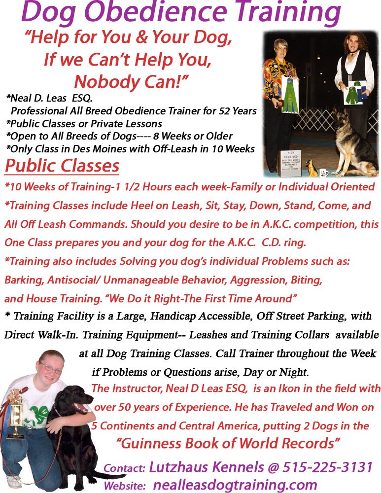 Dog Training Classes South Tampa